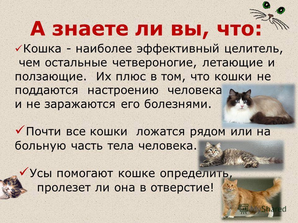 А знаете ли вы, что: Кошка - наиболее эффективный целитель, чем остальные четвероногие, летающие и ползающие. Их плюс в том, что кошки не поддаются настроению человека и не заражаются его болезнями. Почти все кошки ложатся рядом или на больную часть