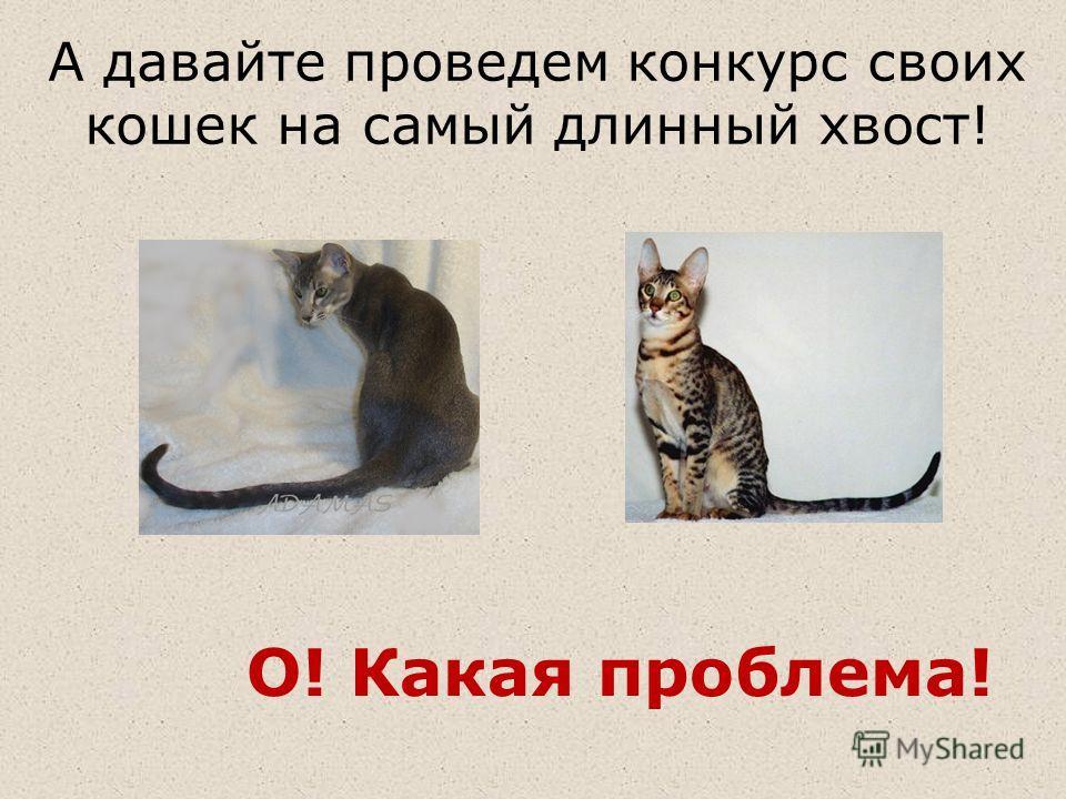 А давайте проведем конкурс своих кошек на самый длинный хвост! О! Какая проблема!