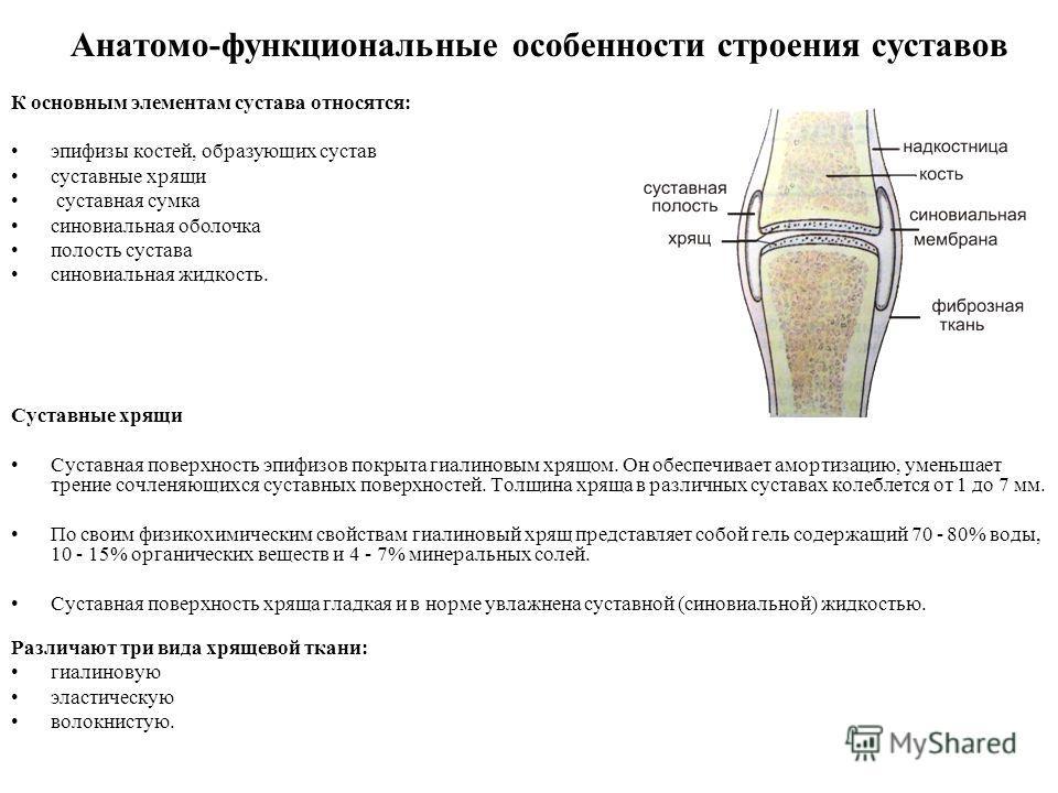 Анатомо-функциональные особенности строения суставов К основным элементам сустава относятся: эпифизы костей, образующих сустав суставные хрящи суставная сумка синовиальная оболочка полость сустава синовиальная жидкость. Суставные хрящи Суставная пове