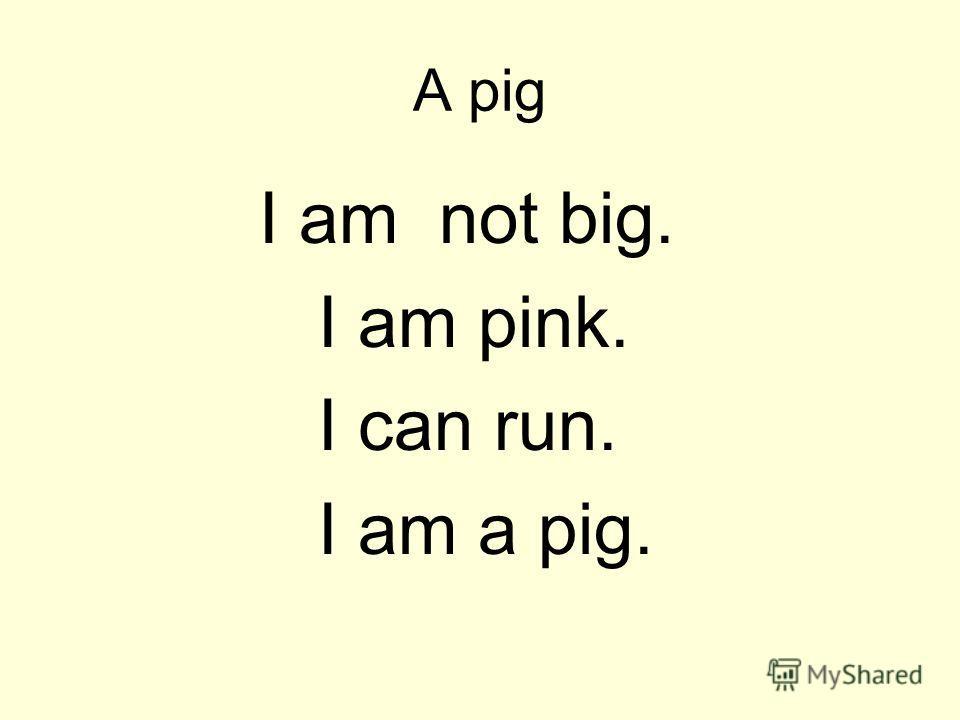 A pig I am not big. I am pink. I can run. I am a pig.