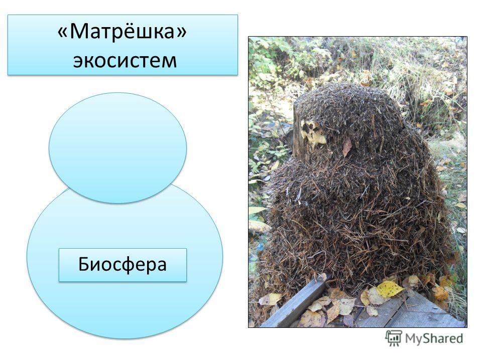 Муравейник «Матрёшка» экосистем Лесной БГЦ Ландшафт Физико- географический район Природная зона (биом) Биосфера