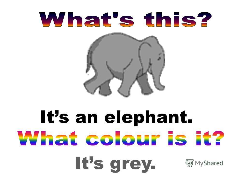 Its grey. Its an elephant.