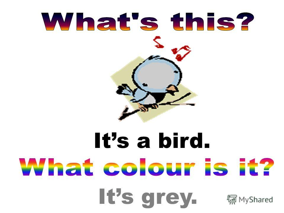 Its grey. Its a bird.
