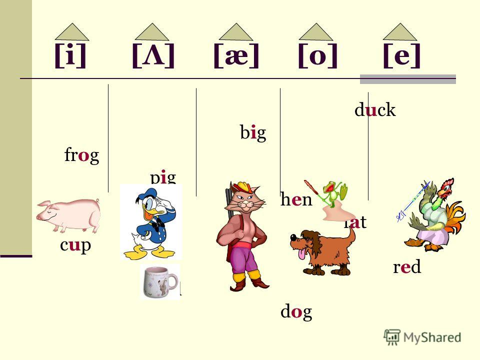 [i] [Λ] [æ] [o] [e] duck big frog pig hen fat cup red bad dog