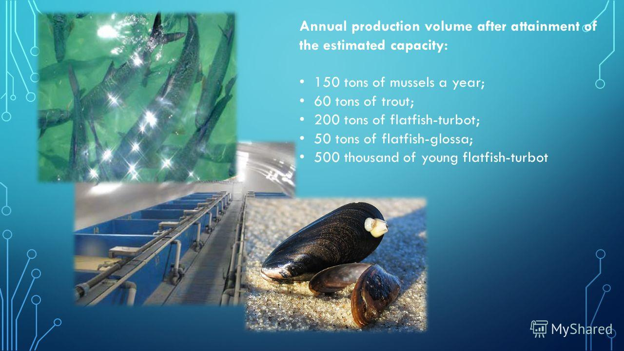 Annual production volume after attainment of the estimated capacity: 150 tons of mussels a year; 60 tons of trout; 200 tons of flatfish-turbot; 50 tons of flatfish-glossa; 500 thousand of young flatfish-turbot