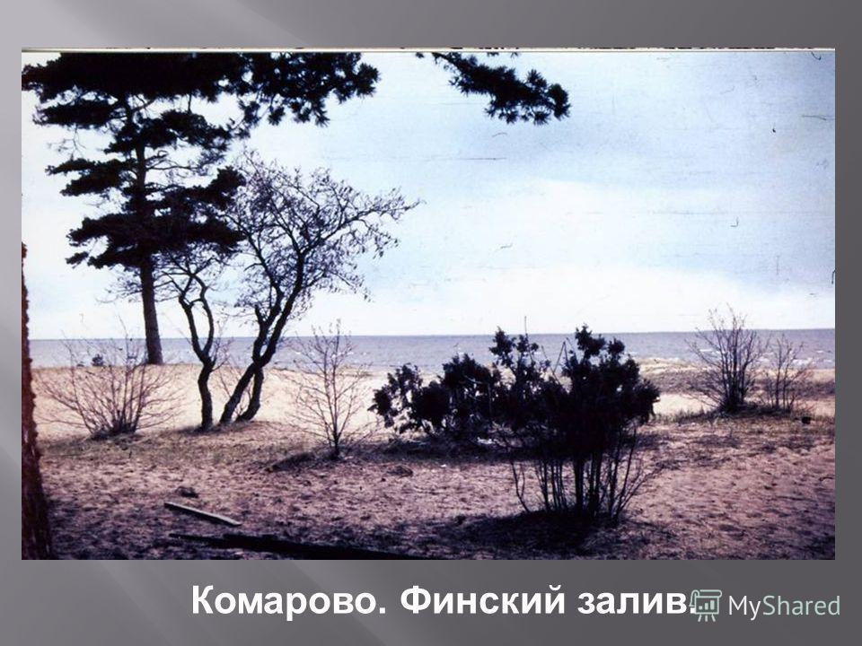 Комарово. Финский залив.