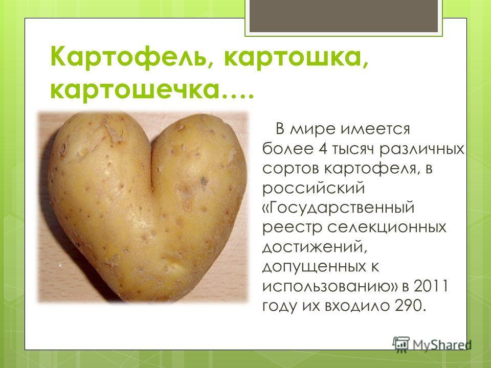 Картофель, картошка, картошечка…. В мире имеется более 4 тысяч различных сортов картофеля, в российский «Государственный реестр селекционных достижений, допущенных к использованию» в 2011 году их входило 290.