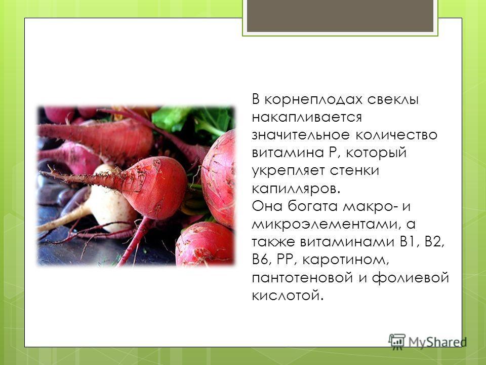 В корнеплодах свеклы накапливается значительное количество витамина Р, который укрепляет стенки капилляров. Она богата макро- и микроэлементами, а также витаминами В1, В2, В6, РР, каротином, пантотеновой и фолиевой кислотой.