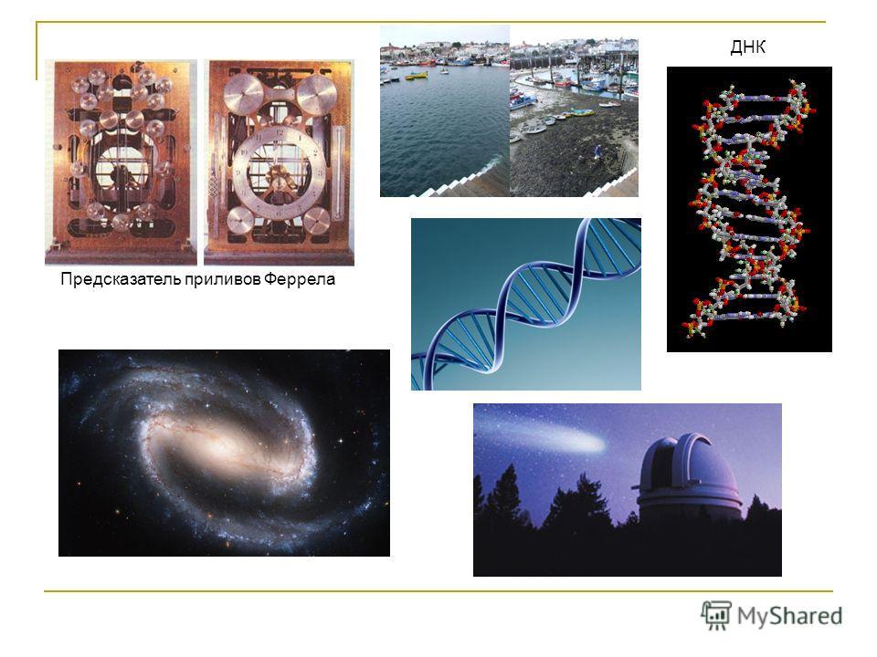Предсказатель приливов Феррела ДНК
