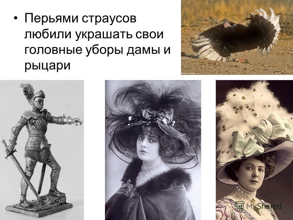 Перьями страусов любили украшать свои головные уборы дамы и рыцари