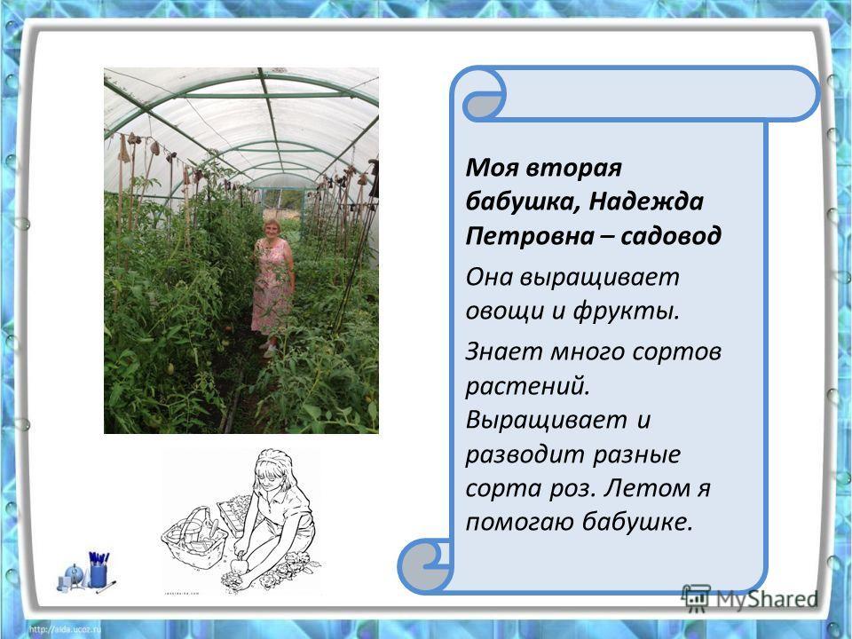 Моя вторая бабушка, Надежда Петровна – садовод Она выращивает овощи и фрукты. Знает много сортов растений. Выращивает и разводит разные сорта роз. Летом я помогаю бабушке.