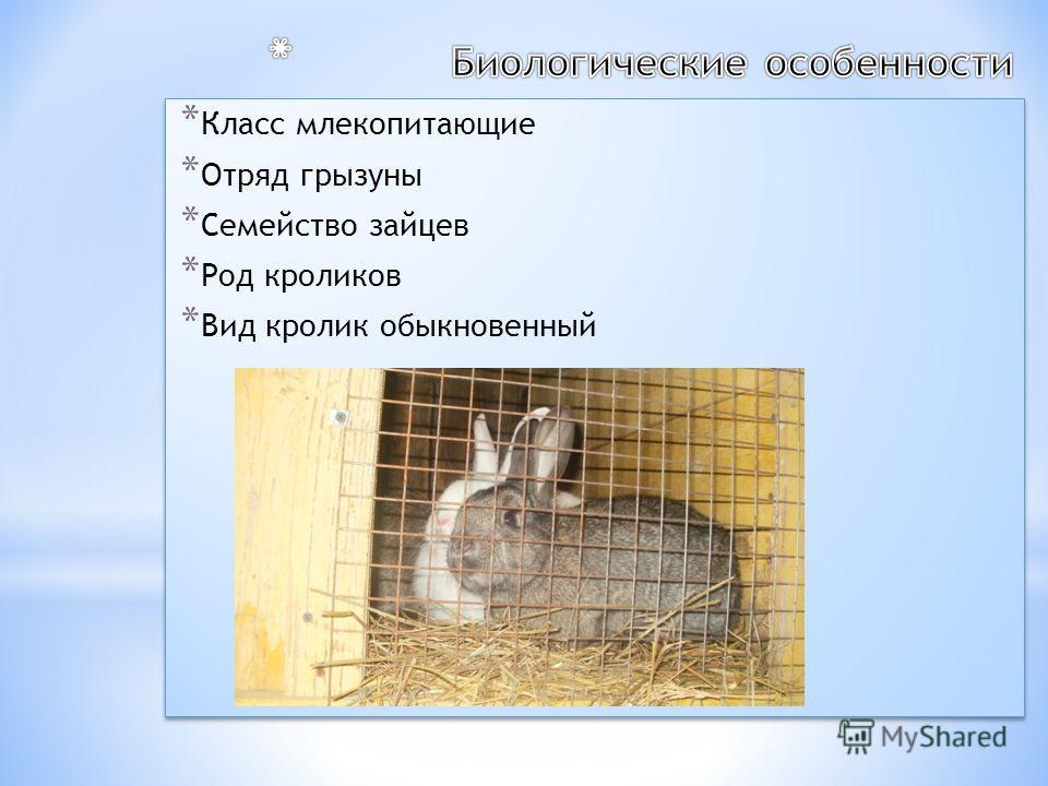 * Класс млекопитающие * Отряд грызуны * Семейство зайцев * Род кроликов * Вид кролик обыкновенный * Класс млекопитающие * Отряд грызуны * Семейство зайцев * Род кроликов * Вид кролик обыкновенный