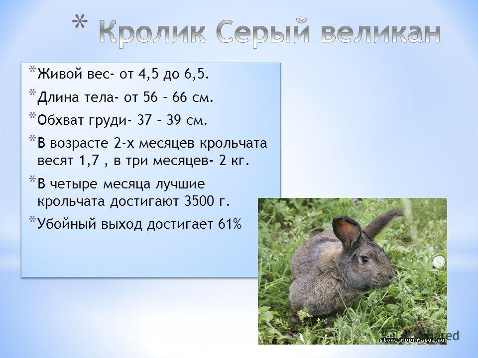 * Живой вес- от 4,5 до 6,5. * Длина тела- от 56 – 66 см. * Обхват груди- 37 – 39 см. * В возрасте 2-х месяцев крольчата весят 1,7, в три месяцев- 2 кг. * В четыре месяца лучшие крольчата достигают 3500 г. * Убойный выход достигает 61% * Живой вес- от