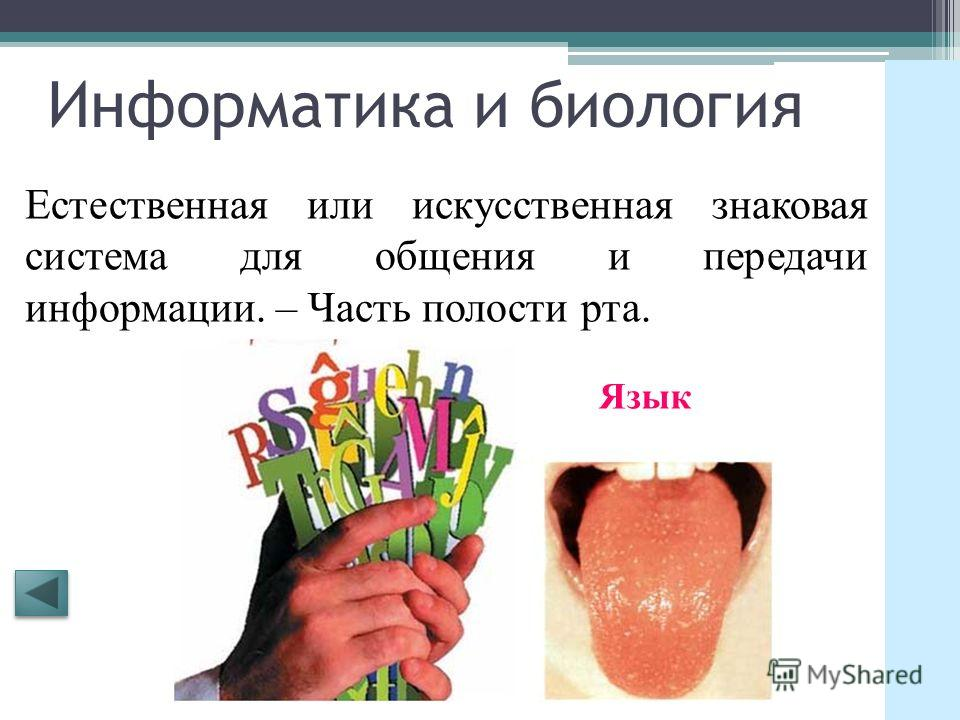 Информатика и биология Разновидность бумаги для печати на принтере. – Орган воздушного питания и газообмена растений. Лист