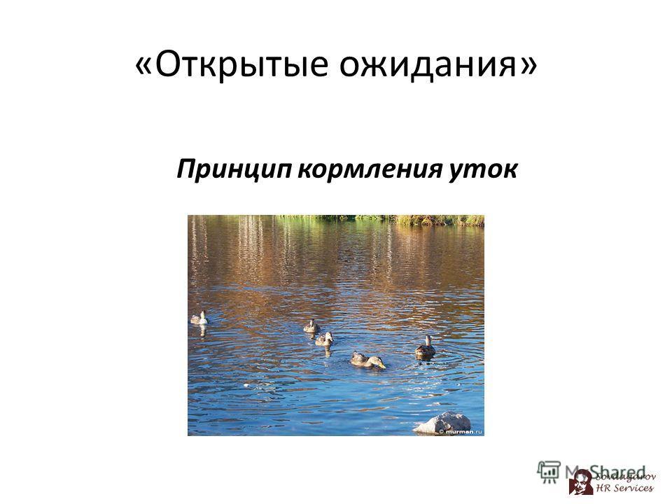 «Открытые ожидания» Принцип кормления уток