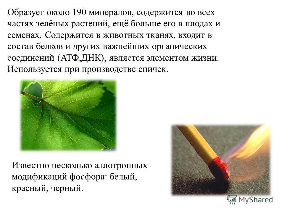 Образует около 190 минералов, содержится во всех частях зелёных растений, ещё больше его в плодах и семенах. Содержится в животных тканях, входит в состав белков и других важнейших органических соединений (АТФ,ДНК), является элементом жизни. Использу