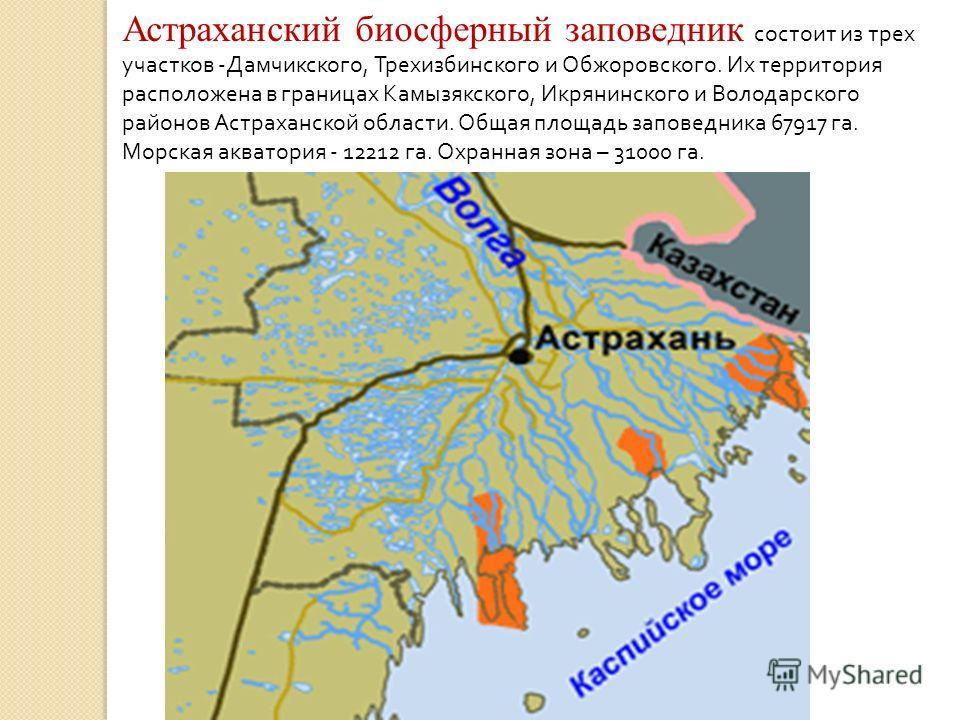 Астраханский биосферный заповедник состоит из трех участков - Дамчикского, Трехизбинского и Обжоровского. Их территория расположена в границах Камызякского, Икрянинского и Володарского районов Астраханской области. Общая площадь заповедника 67917 га.