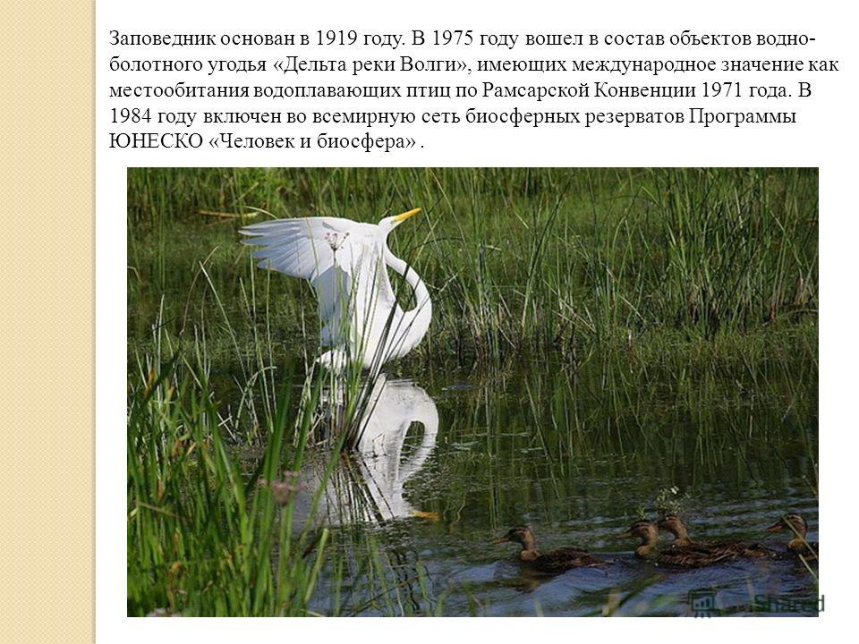 Заповедник основан в 1919 году. В 1975 году вошел в состав объектов водно- болотного угодья «Дельта реки Волги», имеющих международное значение как местообитания водоплавающих птиц по Рамсарской Конвенции 1971 года. В 1984 году включен во всемирную с