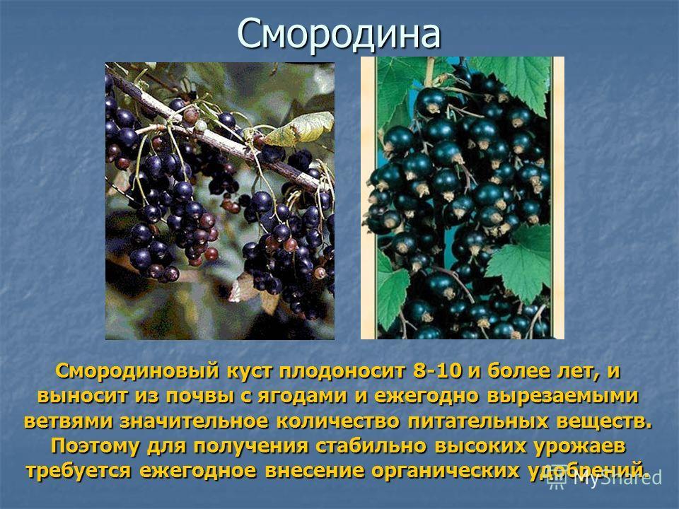 Смородина Смородиновый куст плодоносит 8-10 и более лет, и выносит из почвы с ягодами и ежегодно вырезаемыми ветвями значительное количество питательных веществ. Поэтому для получения стабильно высоких урожаев требуется ежегодное внесение органически