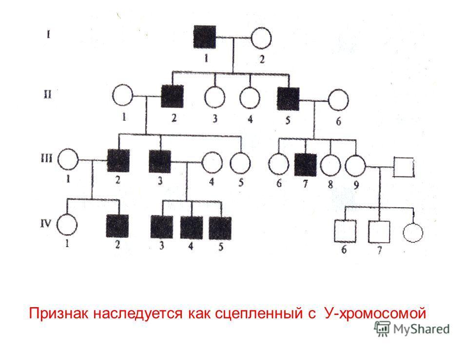 Признак наследуется как сцепленный с У-хромосомой
