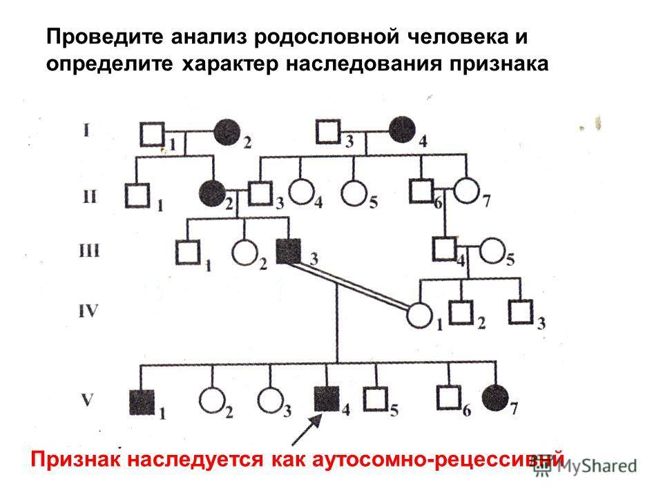 Проведите анализ родословной человека и определите характер наследования признака Признак наследуется как аутосомно-рецессивнй