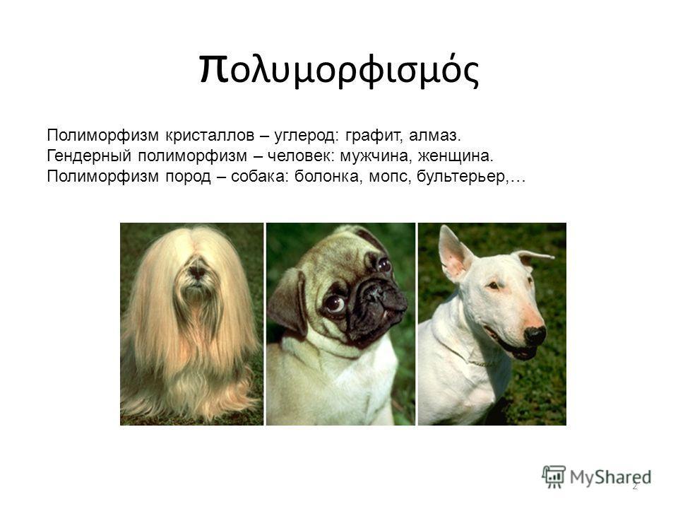 π ολυμορφισμός 2 Полиморфизм кристаллов – углерод: графит, алмаз. Гендерный полиморфизм – человек: мужчина, женщина. Полиморфизм пород – собака: болонка, мопс, бультерьер,…