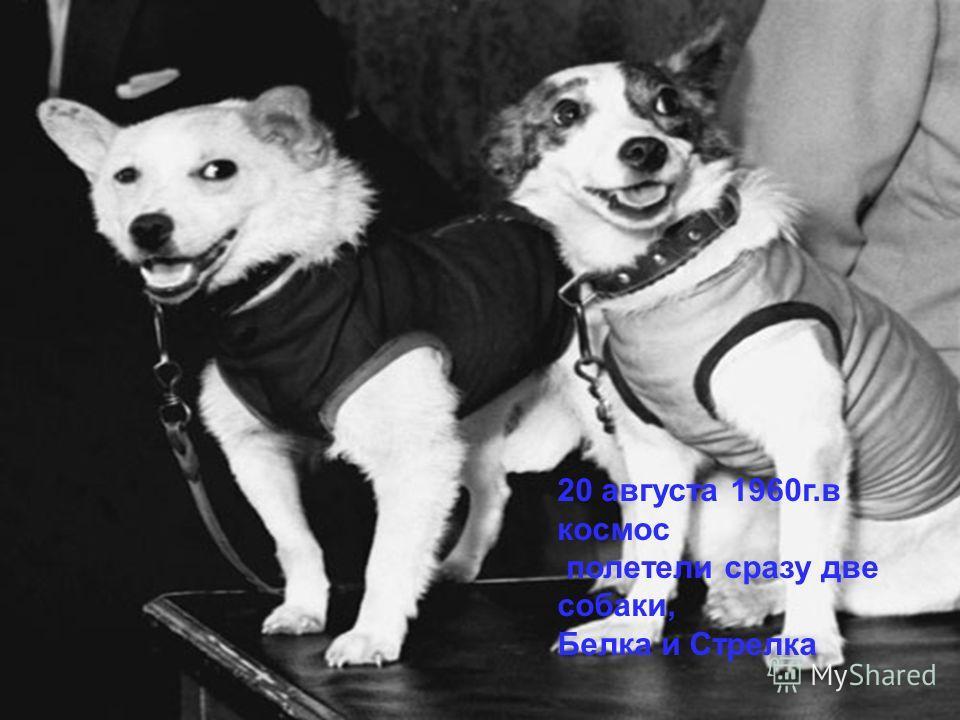 20 августа 1960г.в космос полетели сразу две собаки, Белка и Стрелка