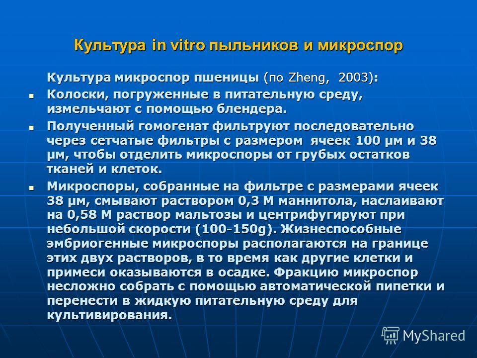 Культура in vitro пыльников и микроспор Культура микроспор пшеницы (по Zheng, 2003): Колоски, погруженные в питательную среду, измельчают с помощью блендера. Колоски, погруженные в питательную среду, измельчают с помощью блендера. Полученный гомогена
