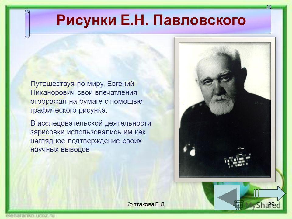 Колтакова Е.Д.29 Рисунки Е.Н. Павловского Путешествуя по миру, Евгений Никанорович свои впечатления отображал на бумаге с помощью графического рисунка. В исследовательской деятельности зарисовки использовались им как наглядное подтверждение своих нау