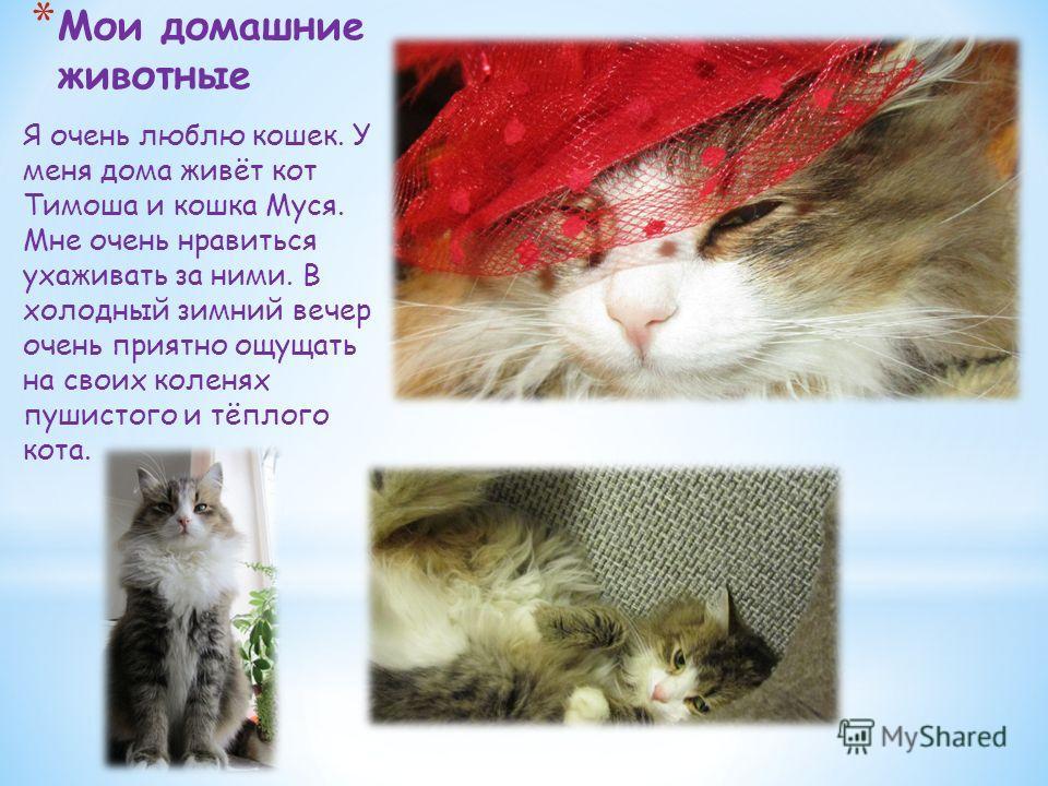 * Мои домашние животные Я очень люблю кошек. У меня дома живёт кот Тимоша и кошка Муся. Мне очень нравиться ухаживать за ними. В холодный зимний вечер очень приятно ощущать на своих коленях пушистого и тёплого кота.