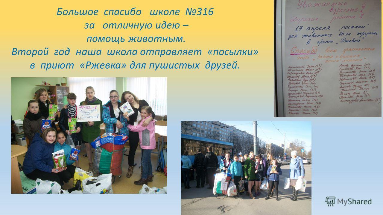 Большое спасибо школе 316 за отличную идею – помощь животным. Второй год наша школа отправляет «посылки» в приют «Ржевка» для пушистых друзей.