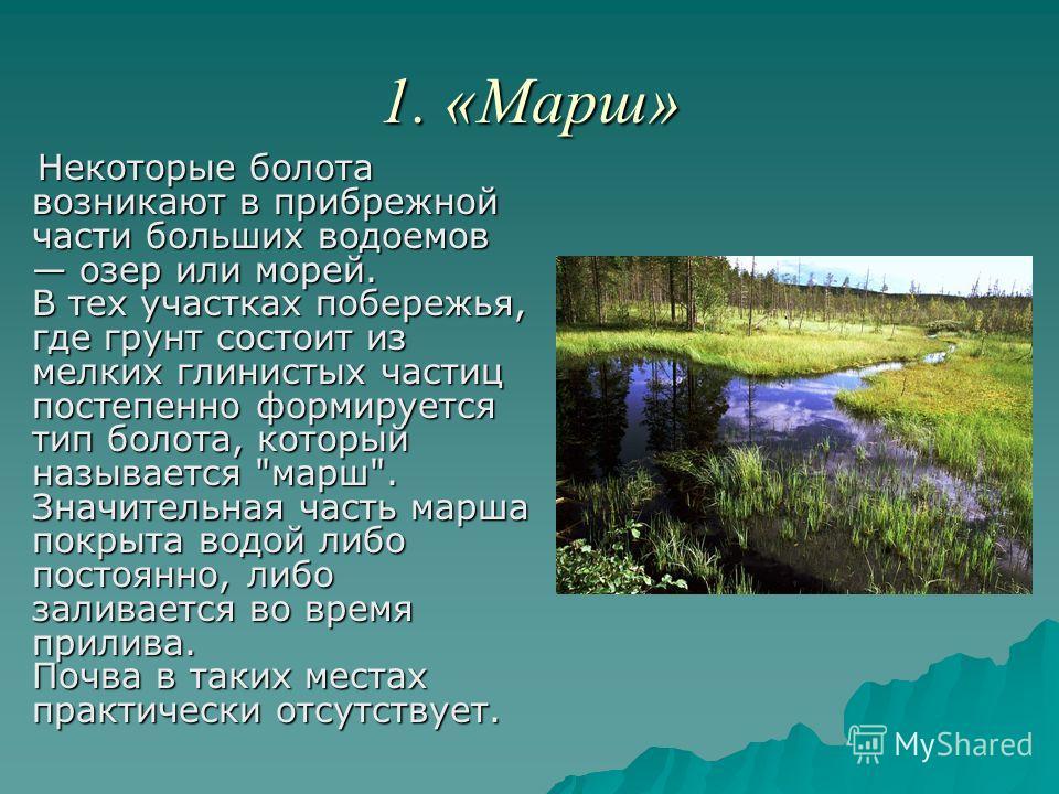 1. «Марш» Некоторые болота возникают в прибрежной части больших водоемов озер или морей. В тех участках побережья, где грунт состоит из мелких глинистых частиц постепенно формируется тип болота, который называется
