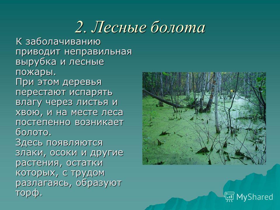 2. Лесные болота К заболачиванию приводит неправильная вырубка и лесные пожары. При этом деревья перестают испарять влагу через листья и хвою, и на месте леса постепенно возникает болото. Здесь появляются злаки, осоки и другие растения, остатки котор
