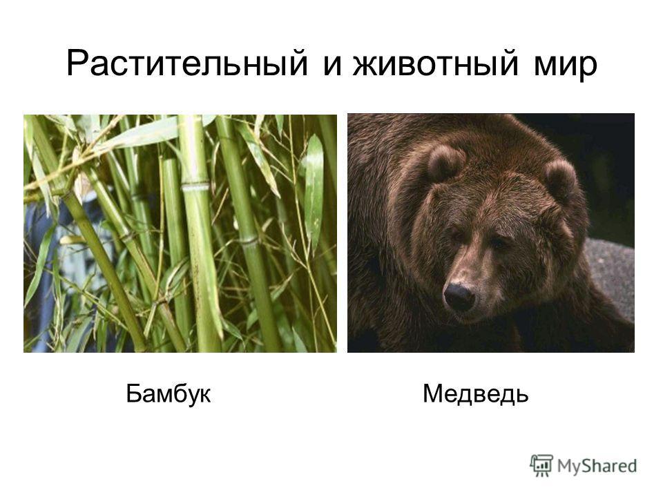 Растительный и животный мир Бамбук Медведь
