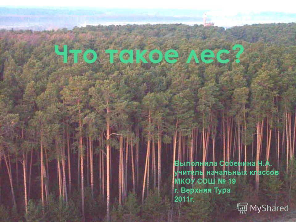 Что такое лес? Выполнила Собенина Н.А. учитель начальных классов МКОУ СОШ 19 г. Верхняя Тура 2011г.