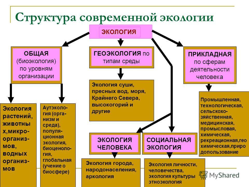 Структура современной экологии ЭКОЛОГИЯ ОБЩАЯ (биоэкология) по уровням организации ГЕОЭКОЛОГИЯ по типам среды ПРИКЛАДНАЯ по сферам деятельности человека ЭКОЛОГИЯ ЧЕЛОВЕКА СОЦИАЛЬНАЯ ЭКОЛОГИЯ Экология растений, животны х,микро- организ- мов, водных ор