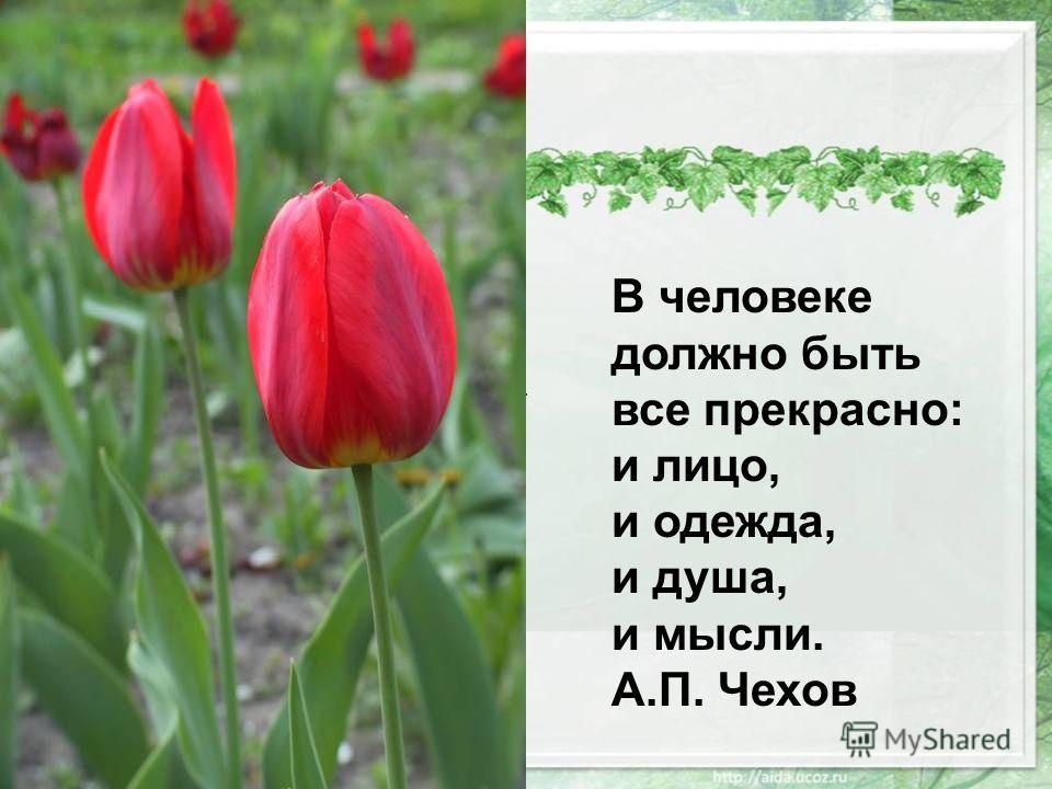 В человеке должно быть все прекрасно: и лицо, и одежда, и душа, и мысли. А.П. Чехов