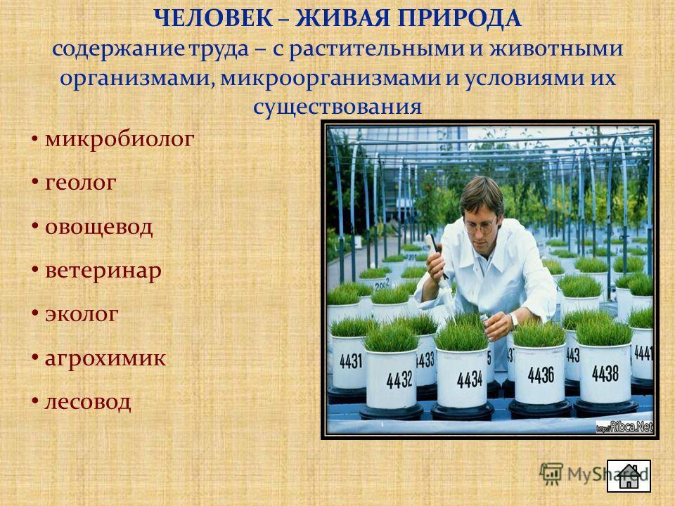 ЧЕЛОВЕК – ЖИВАЯ ПРИРОДА содержание труда – с растительными и животными организмами, микроорганизмами и условиями их существования микробиолог геолог овощевод ветеринар эколог агрохимик лесовод