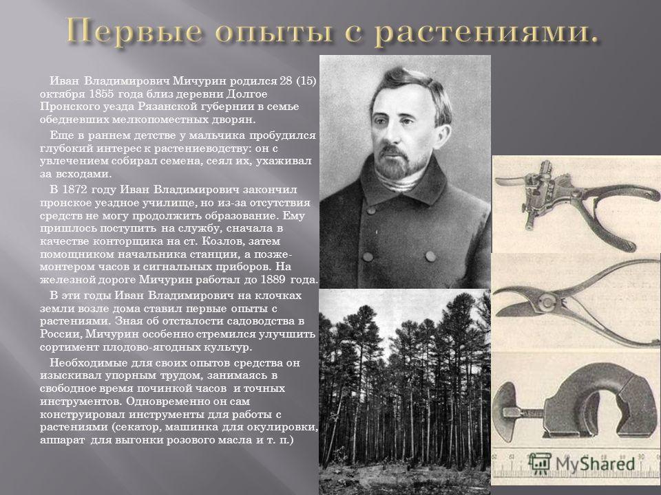 Иван Владимирович Мичурин родился 28 (15) октября 1855 года близ деревни Долгое Пронского уезда Рязанской губернии в семье обедневших мелкопоместных дворян. Еще в раннем детстве у мальчика пробудился глубокий интерес к растениеводству: он с увлечение