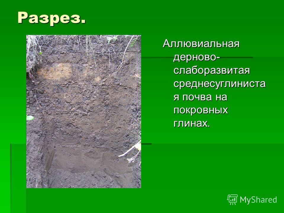 Разрез. Аллювиальная дерново- слаборазвитая среднесуглиниста я почва на покровных глинах.