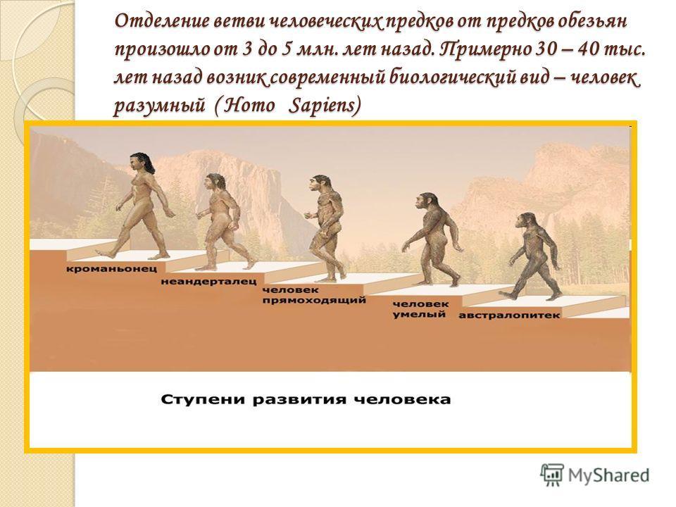 Отделение ветви человеческих предков от предков обезьян произошло от 3 до 5 млн. лет назад. Примерно 30 – 40 тыс. лет назад возник современный биологический вид – человек разумный ( Homo Sapiens)