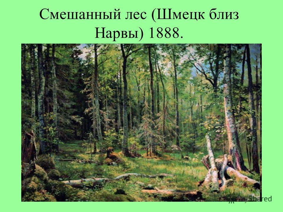 Смешанный лес (Шмецк близ Нарвы) 1888.