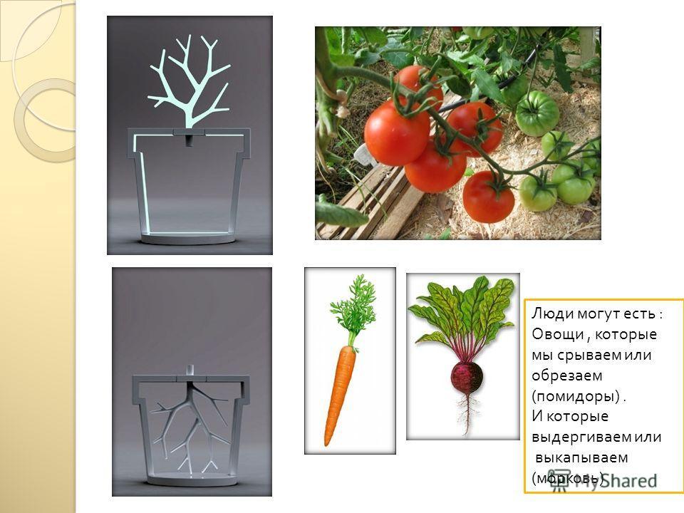 Люди могут есть : Овощи, которые мы срываем или обрезаем ( помидоры ). И которые выдергиваем или выкапываем ( морковь )