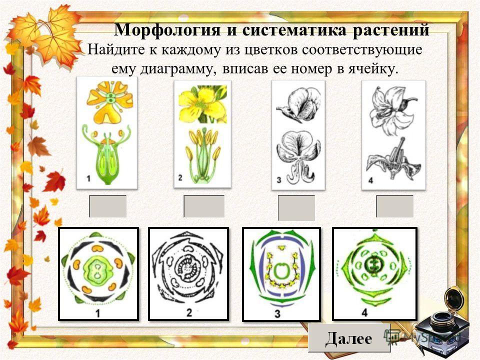 Найдите к каждому из цветков соответствующие ему диаграмму, вписав ее номер в ячейку. Морфология и систематика растений
