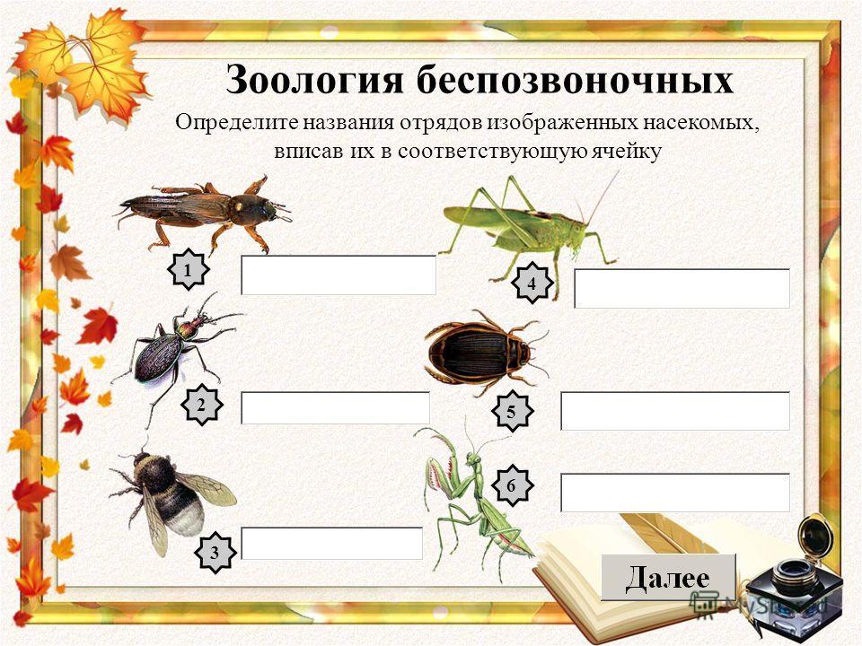 Зоология беспозвоночных Определите названия отрядов изображенных насекомых, вписав их в соответствующую ячейку 1 2 3 4 5 6