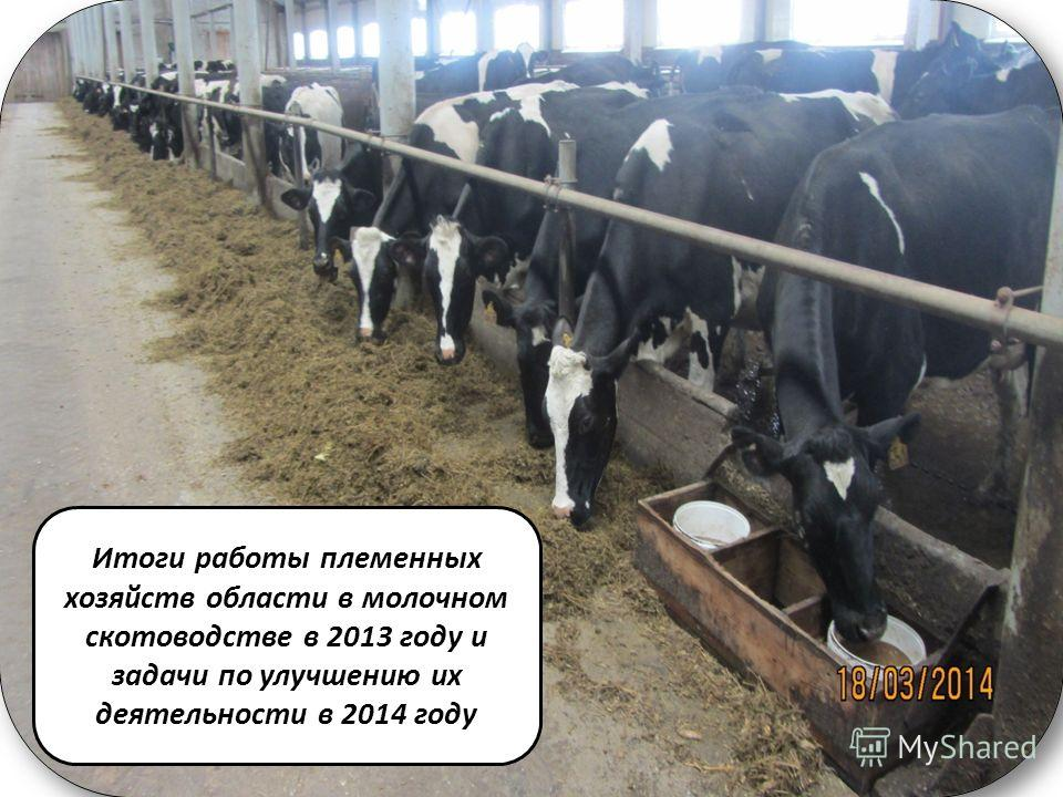 Тема Итоги работы племенных хозяйств области в молочном скотоводстве в 2013 году и задачи по улучшению их деятельности в 2014 году
