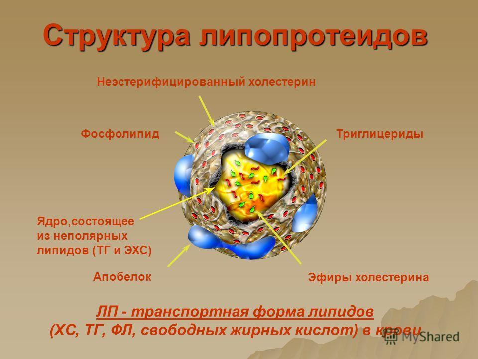 Структура липопротеидов Неэстерифицированный холестерин Фосфолипид Триглицериды Эфиры холестерина Апобелок Ядро,состоящее из неполярных липидов (ТГ и ЭХС) ЛП - транспортная форма липидов (ХС, ТГ, ФЛ, свободных жирных кислот) в крови