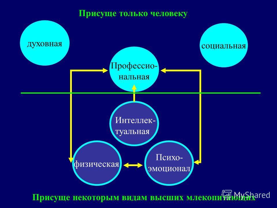 духовная социальная физическая Психо- эмоционал Интеллек- туальная Профессио- нальная Присуще некоторым видам высших млекопитающих Присуще только человеку