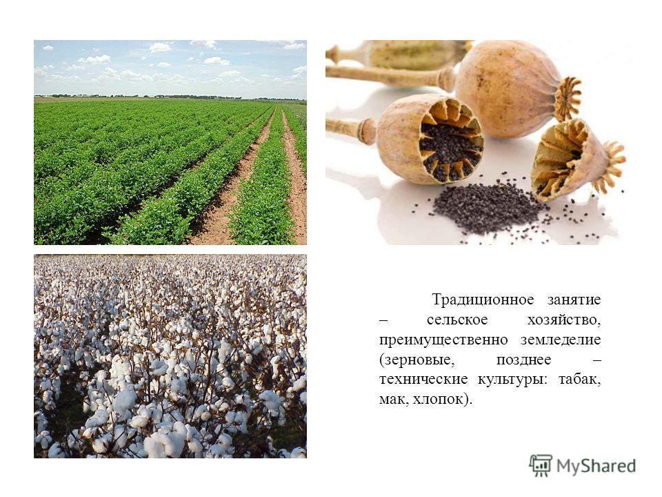 Традиционное занятие – сельское хозяйство, преимущественно земледелие (зерновые, позднее – технические культуры: табак, мак, хлопок).