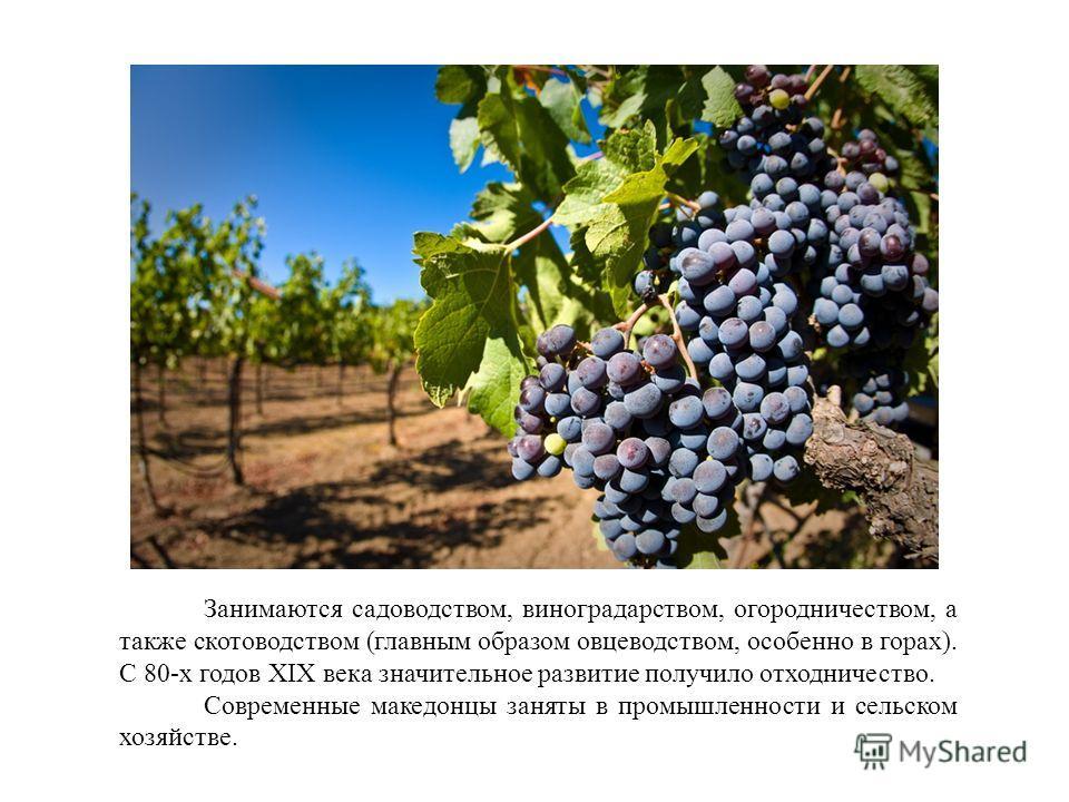 Занимаются садоводством, виноградарством, огородничеством, а также скотоводством (главным образом овцеводством, особенно в горах). С 80-х годов XIX века значительное развитие получило отходничество. Современные македонцы заняты в промышленности и сел